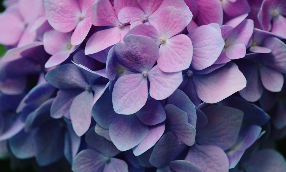 Spring flowers in ultra violet tones - inspiring home interiors